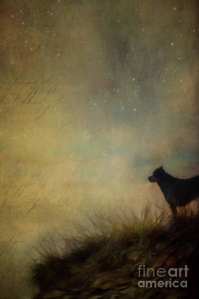 Wall Art - Photograph - The Patience Of A Dog by Priska Wettstein