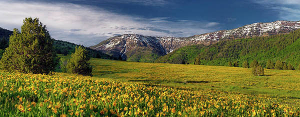 Photograph - The Perfect Mountain Meadow by Leland D Howard