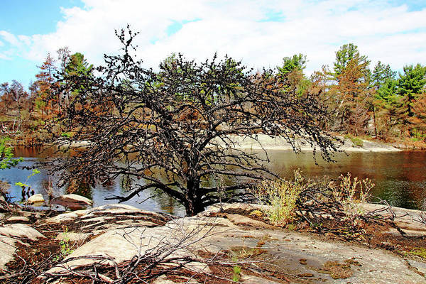 Wall Art - Photograph - The Pine Tree I by Debbie Oppermann