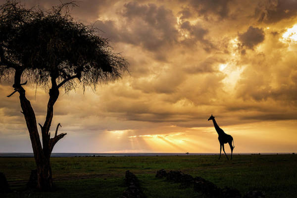 Photograph - The Plains Of Africa by Philip Rispin