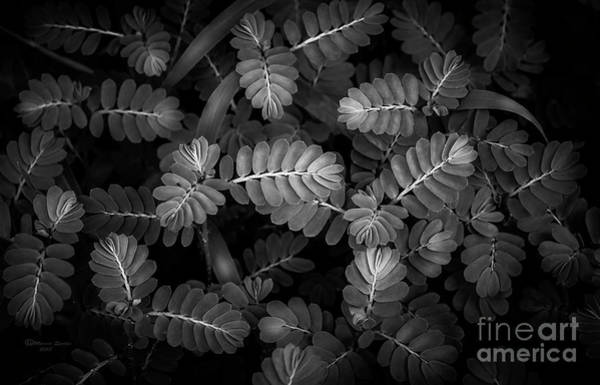 Wall Art - Photograph - The Plant Patterns by Marvin Spates