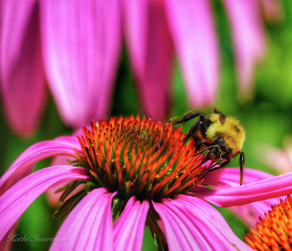 Wall Art - Photograph - The Pollinators by Kathi Isserman