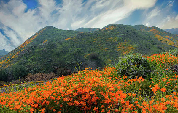Photograph - The Poppies Of Walker Canyon by Lynn Bauer