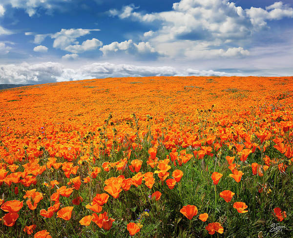 Photograph - The Poppy Field by Endre Balogh