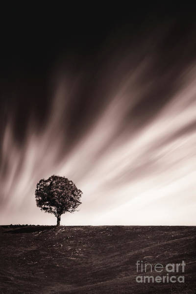 Lone Tree Wall Art - Photograph - The Power Of One by Evelina Kremsdorf