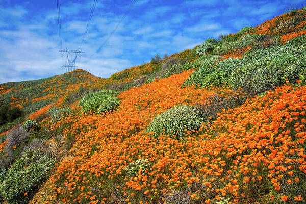 Photograph - The Power Of Poppies by Lynn Bauer
