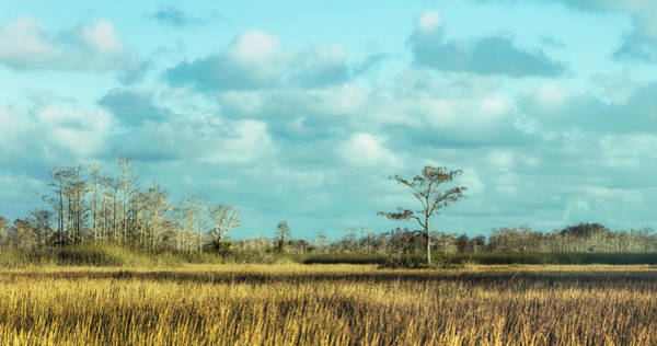 Photograph - The Power Of The Everglades by Debra and Dave Vanderlaan