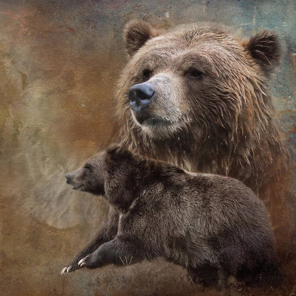 Photograph - The Powerful Grizzly by Jai Johnson