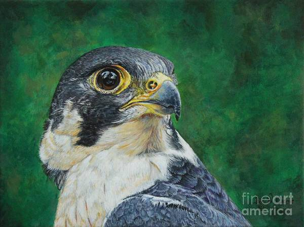 Painting - The Proud Peregrine....fastest Creature On The Planet by Bob Williams