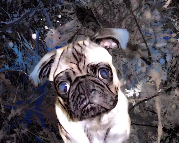 Digital Art - The Pug Portrait by Scott Wallace Digital Designs