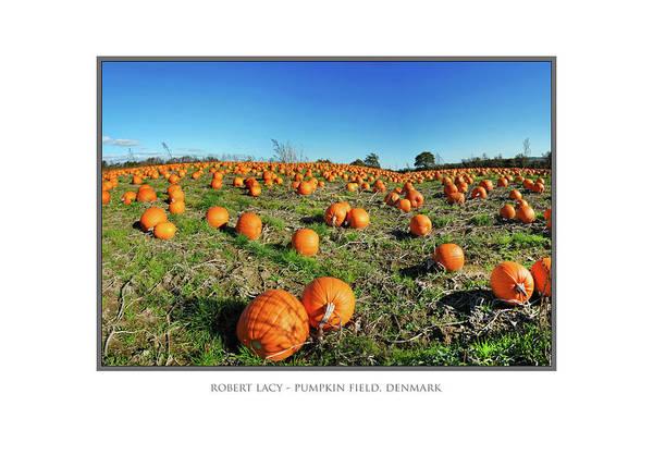 Pumkin Wall Art - Photograph - The Pumpkin Field by Robert Lacy