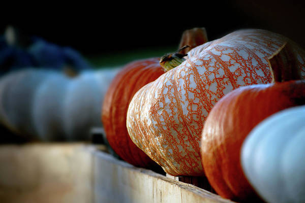Photograph - The Pumpkin Patch by Perry Correll
