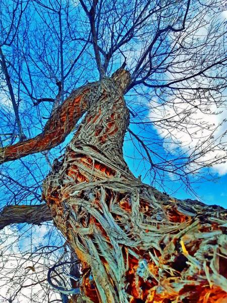 Timeworn Photograph - The Queen Of Pine Park by Tara Turner