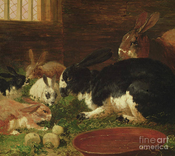 Big Small Painting - The Rabbit Hutch by John Frederick Herring Snr