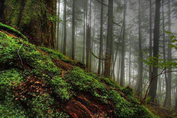 Ketchikan Photograph - The Rain Forest by Carlos Rojas