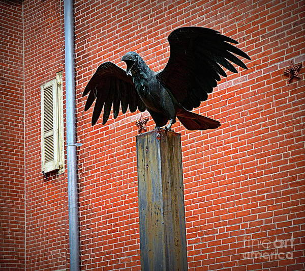 Wall Art - Photograph - The Raven by Tru Waters