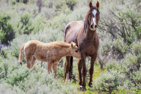 Photograph - The Reassurance Of Touch by Belinda Greb