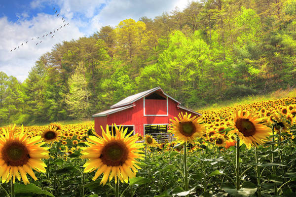 Wall Art - Photograph - The Red Barn In Sunflowers by Debra and Dave Vanderlaan