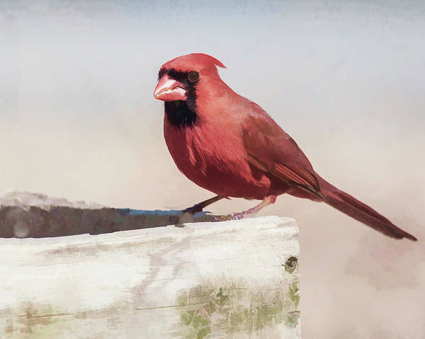 Photograph - The Red Bird by Cathy Kovarik