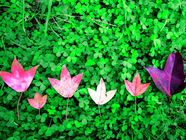Wall Art - Photograph - The Red Maple Leaf On A Green Clover by Photographer, Loves Art, Lives In Kyoto