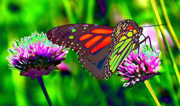 Photograph - The Red Monarch Butterfly by Tom Kelly