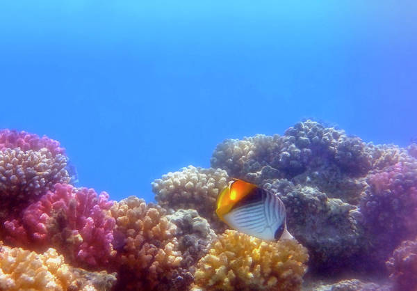 Photograph - The Red Sea Takes Your Breath Away With Its Beauty by Johanna Hurmerinta