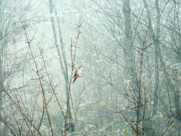 Digital Art - The Redwing by Glenys Garnett
