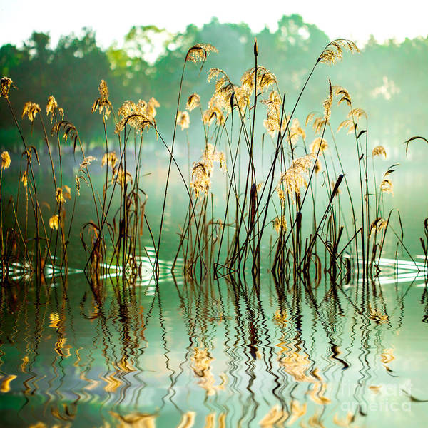Wall Art - Photograph - The Reed In The Evening. Tranquil Scene by Va art
