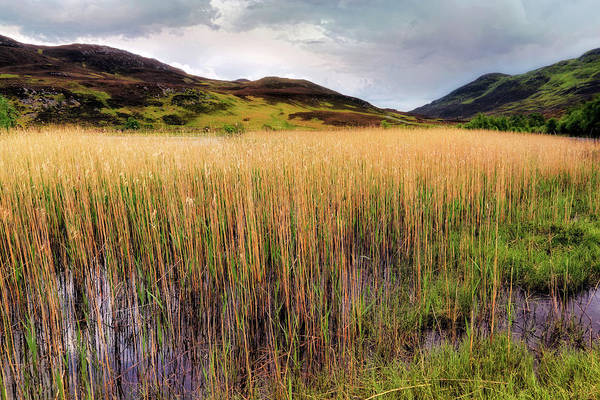Photograph - The Reeds Of Lochan An Daim - Scotland - Perthshire by Jason Politte