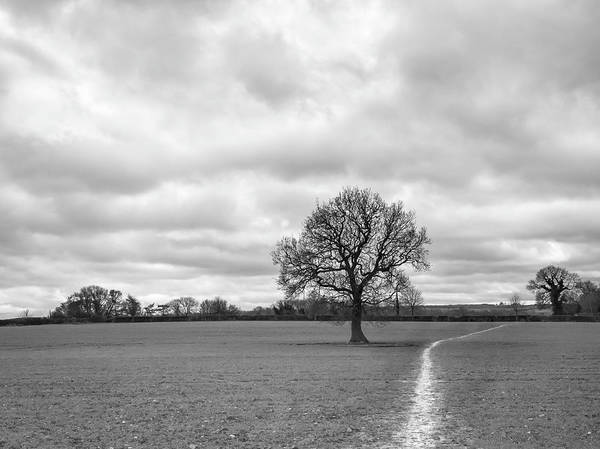 Photograph - The Right Path by Nick Bywater
