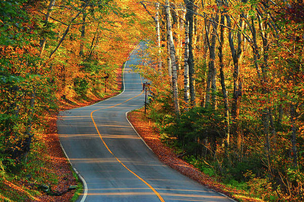 Photograph - The Road Up Mount Greylock by Raymond Salani III