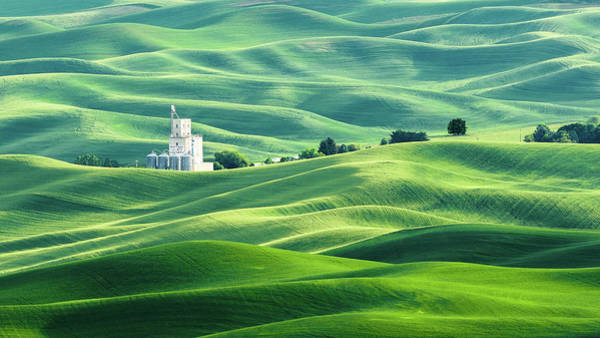 Photograph - The Rolling Fields Of Palouse by Hamish Mitchell