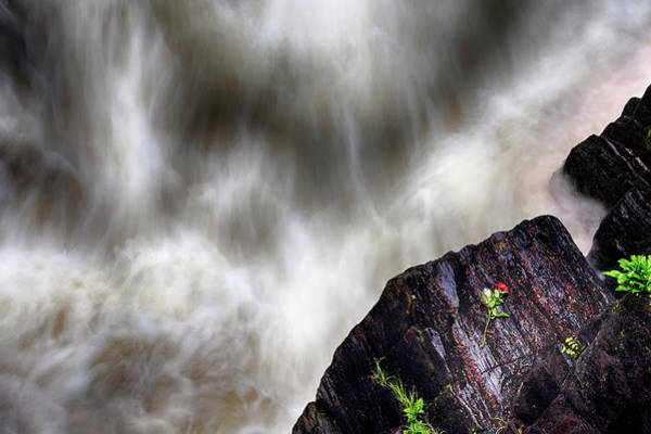 Wall Art - Photograph - The Rose Of Black Linn Falls - The Hermitage - Dunkeld Scotland by Jason Politte