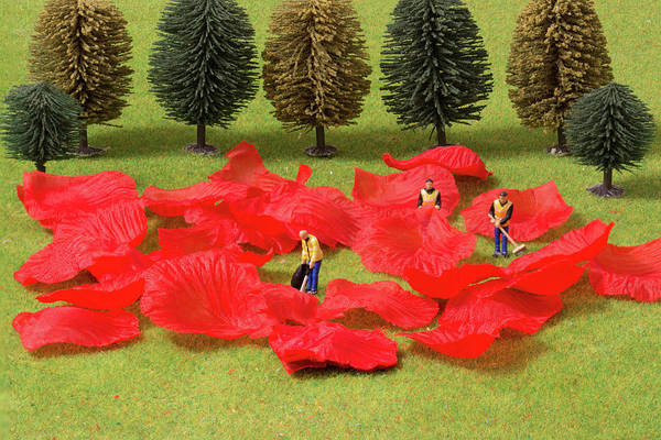 Photograph - The Rose Petal Collectors 1 by Steve Purnell