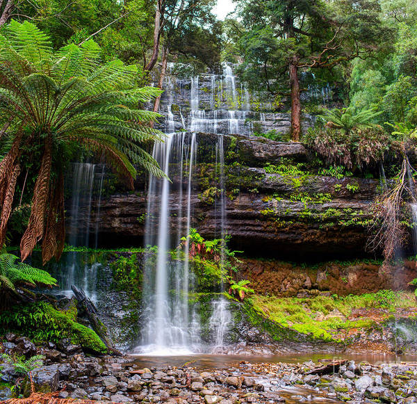 Iconic Wall Art - Photograph - The Russell Falls, A Tiered Cascade by Yevgen Belich