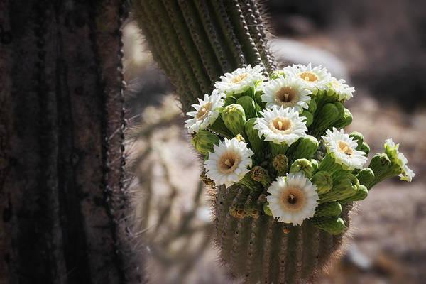 Wall Art - Photograph - The Saguaro Bride  by Saija Lehtonen