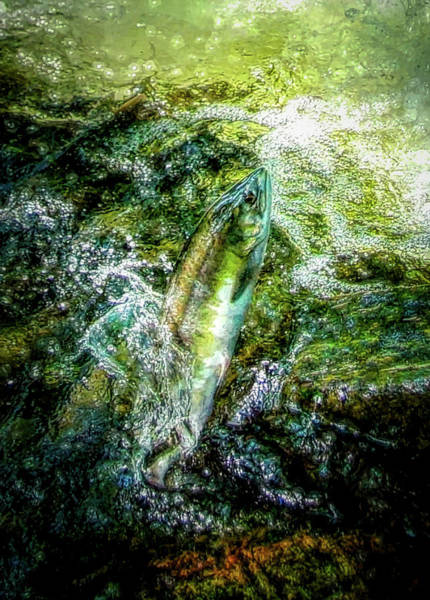 Wall Art - Digital Art - The Salmon by Ernie Echols