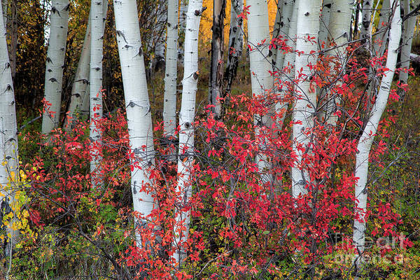 Photograph - The Scarlet Curtain by Jim Garrison