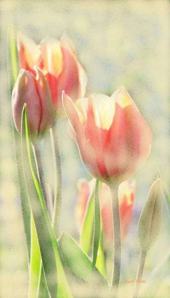 Photograph - The Scent Of Tulips by Angela Davies