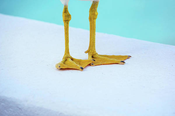 Photograph - The Seagull's Feet - Minimalism by Jonny Jelinek