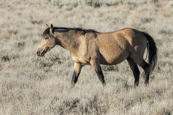 Photograph - The Self-assured Saunter Of A Stallion by Belinda Greb