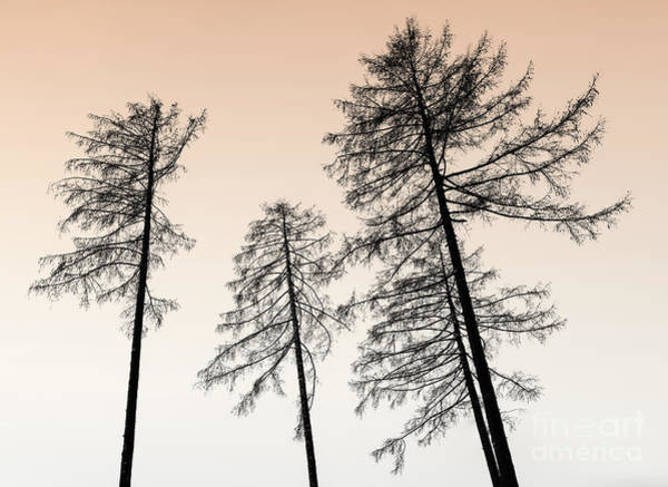 Leafless Tree Wall Art - Photograph - The Sentinels by DiFigiano Photography