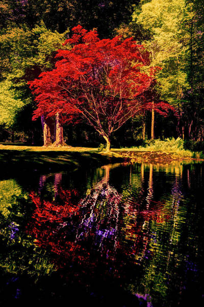 Photograph - The Shapes Of Autumn by Debra and Dave Vanderlaan