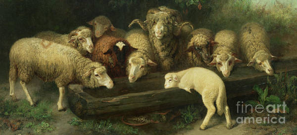 Trough Wall Art - Painting - The Sheep Trough by Friedrich Ferdinand Schmalzigaug