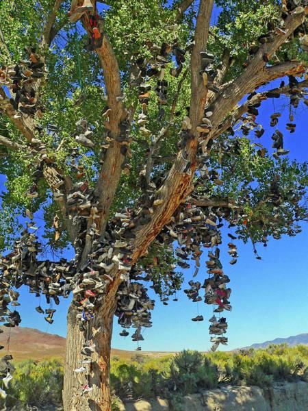 Photograph - The Shoe Tree by David Bailey