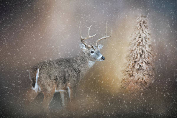 Photograph - The Silence Of Christmas Morning by Jai Johnson