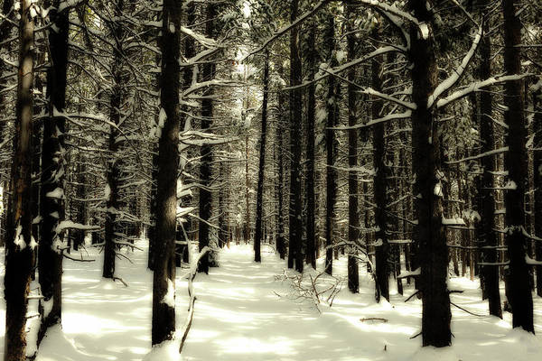 Wall Art - Photograph - The Silence Of The Pines by Eric Glaser