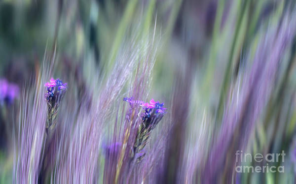 Photograph - The Soft Side by Susan Warren