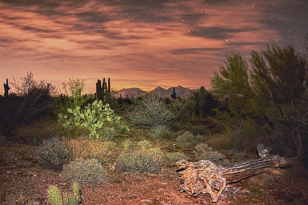 Photograph - The Sonoran Desert At Night by Chance Kafka
