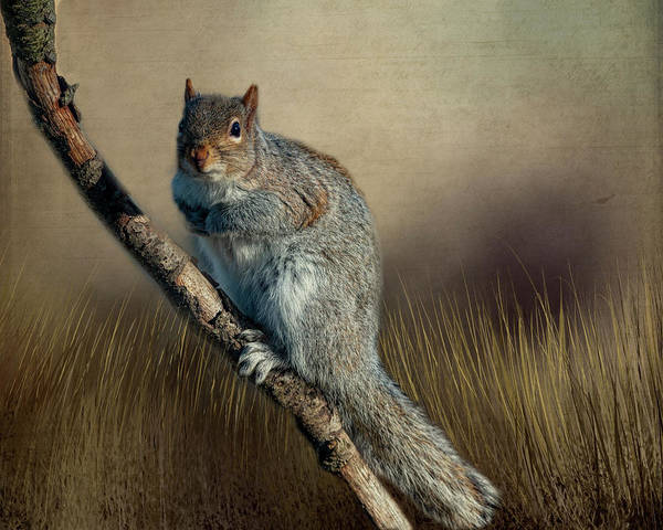 Photograph - The Squirrel by Cathy Kovarik